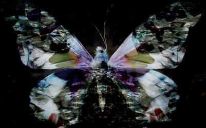 Manu Jobst Kunstfabrik Butterfly